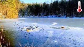 В ледяном озере тонули двое псов, а на берегу плакала их хозяйка - Смешные кошки МатроскинТВ