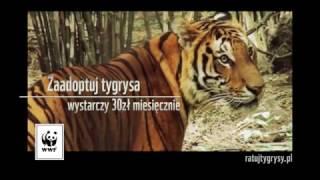 Ratuj tygrysy - WWF Polska