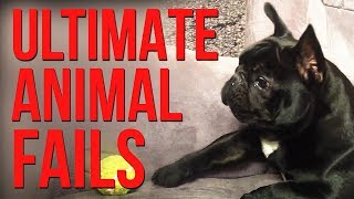 FUNNY ANIMALS - Animal Fails Compilation - bEST oF