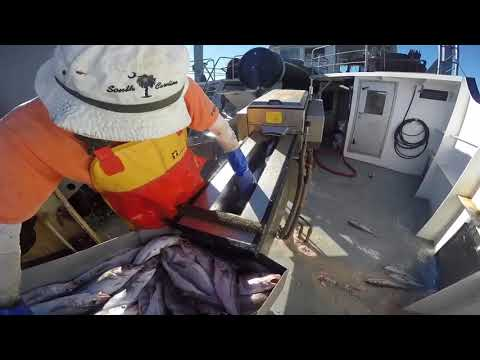 The F/V Nobska Haddock Fishing