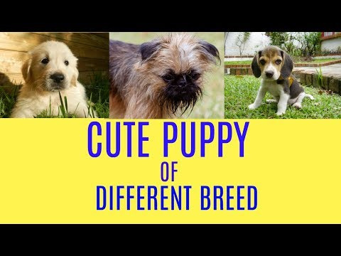 Cute Puppy Dogs Various Breed