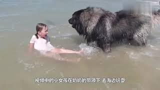 妈妈让狗狗照看小主人,接下来的画面让人暖心,镜头记录过程