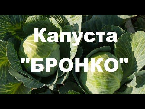 """Подкормка капусты """"Бронко"""" таблица удобрения"""