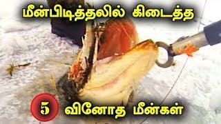 மீன்பிடித்தலில் கிடைத்த 5 வினோத மீன்கள்   5 Craziest Fishing Catches