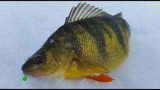 Jumbo Perch Fishing Tips and Techniques for Cascade Lake Idaho