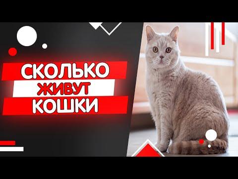 Средняя продолжительность жизни кошки в домашних условиях