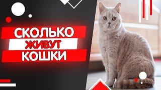 видео Сколько живут кошки?