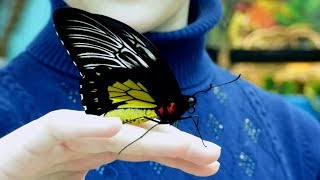 Виставка метеликів та екзотичних тварин