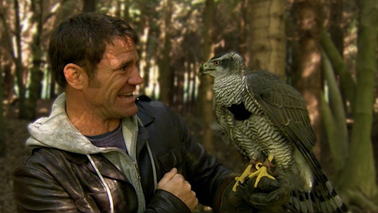 Goshawk Chases Down Presenter | Deadly 60  | Earth Unplugged