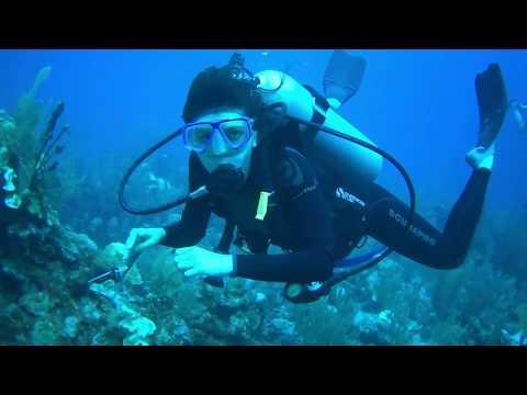 Scuba Diving - Turneffe Attoll, Belize - December 2019