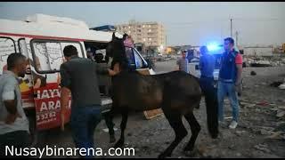Nusaybin'de yaralı at Mardin Hayvan Hastanesine taşındı