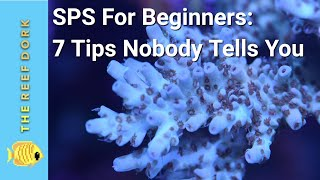 SPS For Beginners: 7 Tips Nobody Tells You
