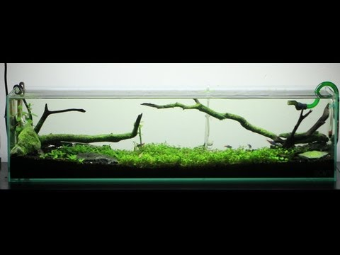 First Planted Tank