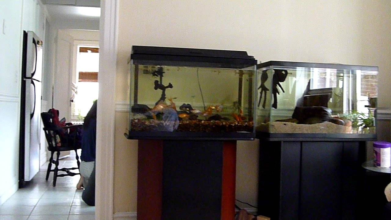 Two 30 gallon fish tanks 29 gallon aquarium with stand Thirty gallon fish tank