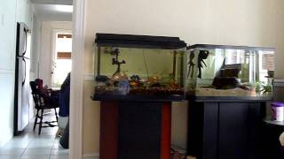 Two 30 Gallon Fish Tanks -29 Gallon Aquarium With Stand, Goldfish And Planted Tank