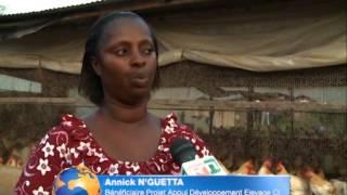 Côte d'Ivoire / élévage :  plusieurs jeunes chômeurs sont bénéficiaires du projet PADECI