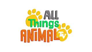 KIDS VIDEOS | OSTRICH | ANIMALS FOR CHILDREN | FROM : all things animal TV