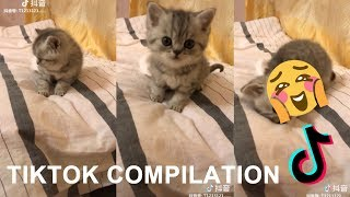 [THE FUNNIEST CAT IN THE WORLD] CAT & DOG FUNNY VIDEO Meme Compilation # 7