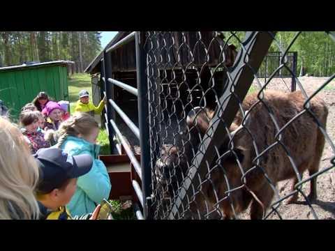 Урок экологии для рязанских школьников прошел в заповеднике Брыкин Бор.