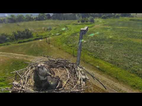 Osprey Nest - Charlo Montana Cam 07-17-2017 09:56:26 - 10:56:26