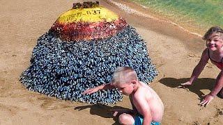 Una Familia Encontró Algo Extraño en la Playa, lo Que Sucedió Después Sorprendió a Todos