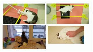 Стресс и инфекционные заболевания у кошек