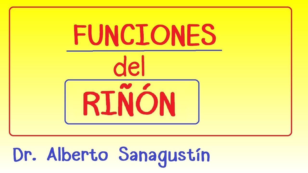 FUNCIONES del RIÑÓN #fisiología - YouTube