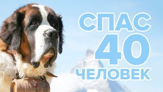 ПЕС СПАС 40 ЧЕЛОВЕК - ИСТОРИЯ БАРРИ