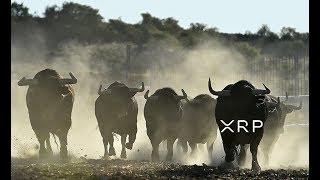The Ripple XRP Wall Street Herd Is Coming