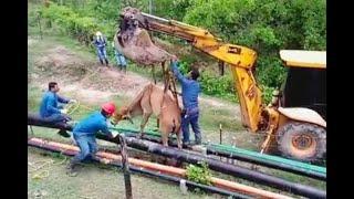 Explotación petrolera en Puerto Boyacá se volvió una trampa mortal para animales y naturaleza