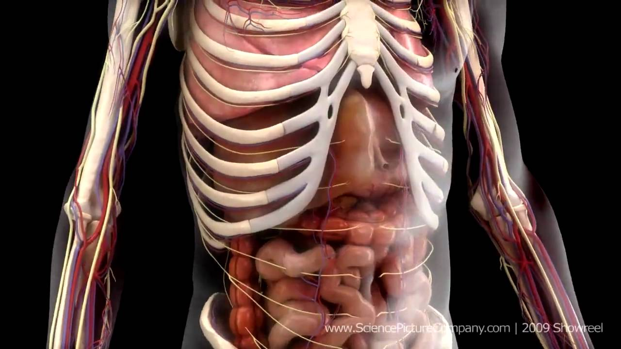 medical animation hd science picture company demo r