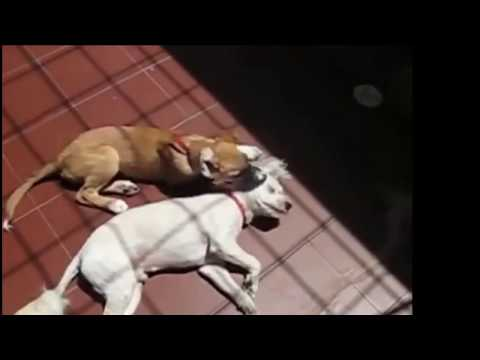 Why Do Dogs Love To Lay In The Sun? Ep2