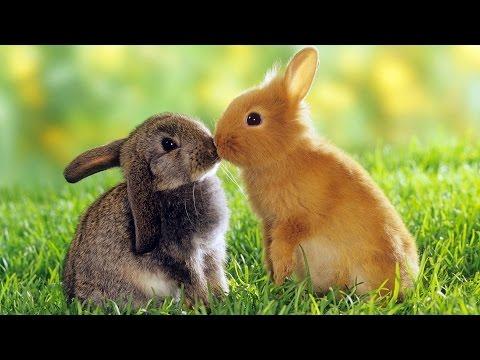 Стихи про кролика, кроликов