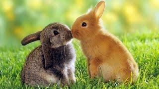 Кролики - смешные и милые зайчики. Видео Подборка - [NEW HD](Кролики или зайчики, или как вы их называете, они смешные и милые. Посмотрите этих забавных кроликов и симпа..., 2016-03-24T14:42:23.000Z)