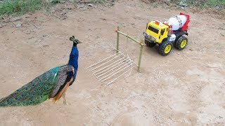 DIY Simple Bird Trap - How to Make a Simple Bird Trap Using Truck (Work 100%)