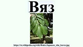 видео Как выглядит дерево вяз - фото и описание, посадка и уход