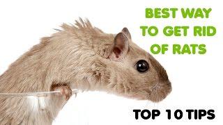 BEST WAY TO GET RID OF RATS - TIPS FOR RAT CONTROL LONDON UK - EXTERMINATORS PEST CONTROL