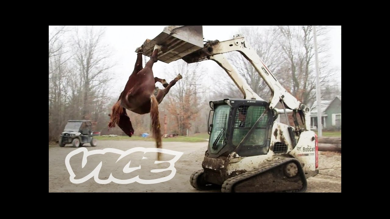 An Inside Look at the Exotic Animal Trade: Profiles by VICE