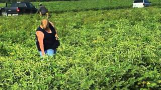 South Georgia U-Pick Farm Has Loyal Following