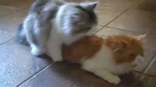 Kitty Porn  Flip Flop & Sneaker making love
