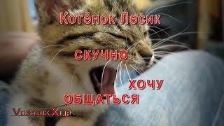 Котёнок Лесик Скучно Хочу Общаться