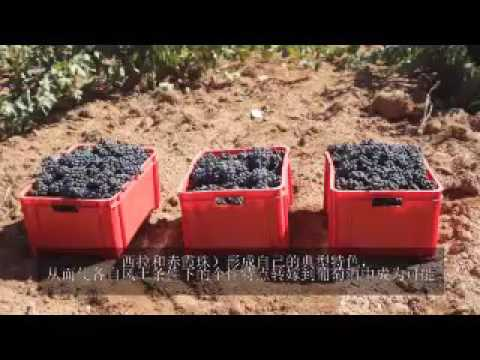 Vinos Gourmet.