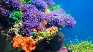 Do Corals Need To Eat?   Aquarium Care