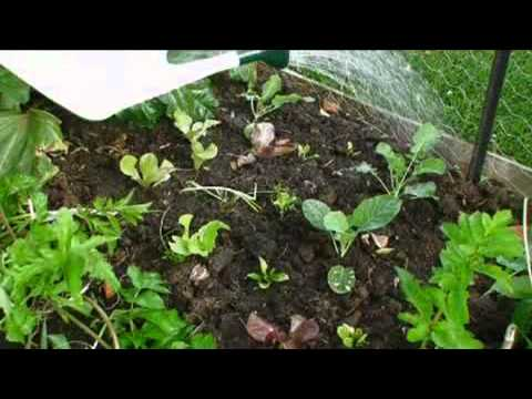 Organic Food Without all the problems!! - Go to : http://go1.in/organicfood
