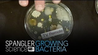 Growing Bacteria - Cool Science Experiment