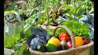 Sayur-Mayur di Kebun Robert Rüdiger Jerman