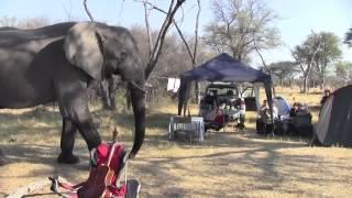 Elephant through our Campsite - Khwai River, Botswana 2012