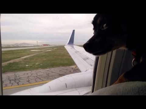 chihuahua-on-delta-airlines-🐕🛫