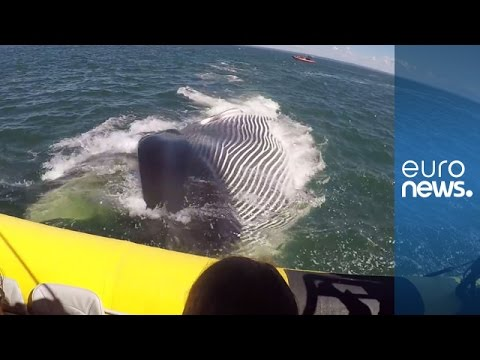 Massive finback whale surfces inches from tourist boat