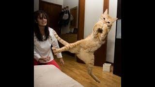 Супер пупер приколы с кошками смешная подборка с животными